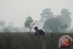 BMKG jelaskan fenomena kabut di Bengkulu