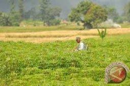 Pemkot Kendari  komitmen mempertahankan sektor pertanian