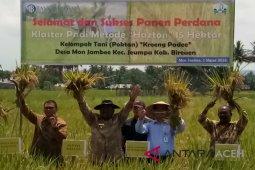 Produktivitas padi pola tanam hazton capai 11 ton/ha