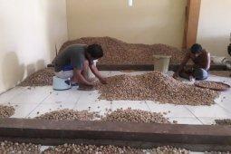 Disperindag isyaratkan Maluku bakal ekspor pala