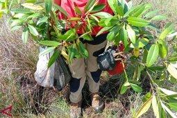 Mangrove Bengkulu perlu dipertebal