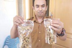 Bisnis lokan crispy jadi usaha berkambang di Aceh Singkil