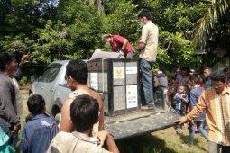 BKSDA Aceh evakuasi orang utan dengan kondisi luka tembak