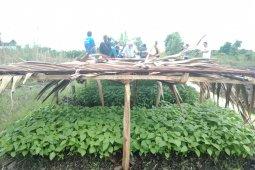 Banyak lahan luas dan terpencil berpotensi hasilkan pangan berkualitas