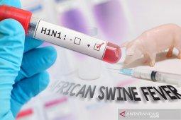 Setelah COVID-19, peneliti China keluarkan peringatan dini pandemi flu babi