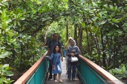Wisata murah dengan ekowisata mangrove