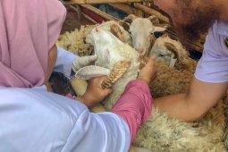 Kesehatan hewan kurban di Kubu Raya diperiksa jelang Idul Adha 1441 Hijriah