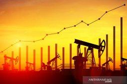 Harga minyak melonjak jelang pertemuan OPEC+ dan relaksasi penguncian