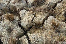 Pakar: Mitigasi bencana kekeringan perlu menjadi prioritas