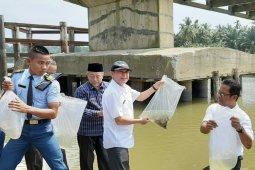 Udang galah jadi komoditas unggulan di  Aceh Tamiang