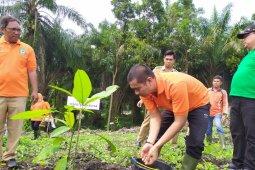 500 bibit pohon ditanam di bantaran Sungai Bah Bolon