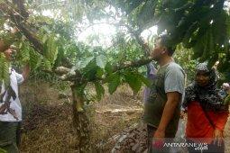 Pakar: Potensi kopi Rejang Lebong luar biasa