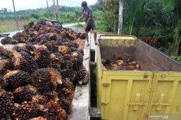 Harga TBS di Bengkulu ditetapkan Rp1.540 per kilogram