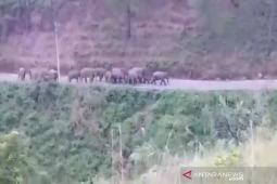 Delapan tahun konflik gajah di Pintu Rime Gayo