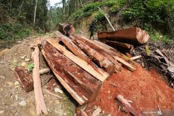 South Kalimantan continues to protect forest from illegal logging