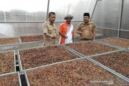 Produksi biji kopi Rejang Lebong alami peningkatan