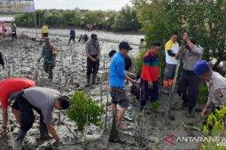 BKSDA tanam bibit mangrove di Cagar Alam Tanjung Panjang Pohuwato