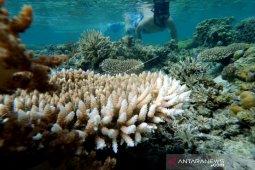 Wisata bawah laut Pulo Cinta Boalemo yang indah