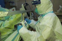 Ular atau kelewar penyebab virus corona yang menjadi wabah mematikan di China