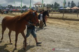 327 ekor kuda meriahkan pacuan tradisional di Bener Meriah