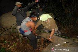 Anak gajah Sumatera diselamatkan dari jerat di HTI