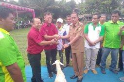 Asian Agri salurkan bantuan 400 ekor kambing ke Labusel
