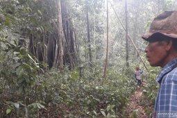 Merawat hutan di Kabupaten Bangka Barat melalui budi daya madu