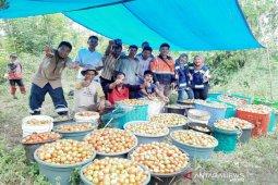 Kelompok tani binaan SMGP panen, setengah hektar hasilkan 1 ton tomat