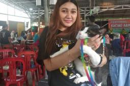 Seru, Festival Kucing Kampung di Pontianak hadirkan kontes unik