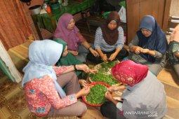 Di tangan kelompok perempuan Bengkulu ini, kecombrang diolah jadi beragam kuliner