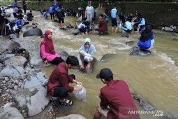 Lestarikan ikan lokal, ribuan Ikan Dewa dilepas ke Sungai Ciliwung di Puncak Bogor