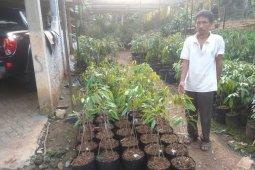 Petani kembangkan durian varietas unggul bidik pasar ekspor