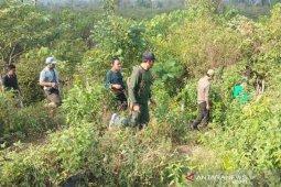 Tim konservasi BKSDA pantau keberadaan harimau di Bener Meriah