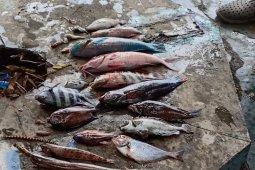 Syahbandar Ternate awasi kapal buang limbah ke laut