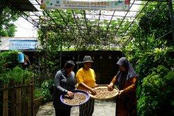 Warga Kampung Herbal Surabaya kembangkan tanaman empon-empon