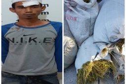 Curi empat karung padi milik warga, Anto diamankan polisi Pangkalan Susu Langkat