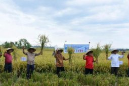 Pemkab Sergai apresiasi panen raya padi di Dolok Masihul