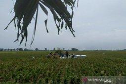 Stok beras Bulog Sumut  aman hingga pertengahan tahun 2020