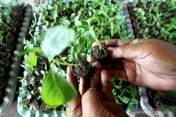 Permintaan bahan pangan organik naik drastis saat pandemi COVID-19
