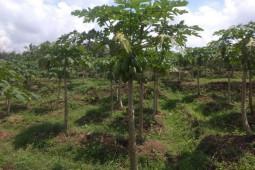 Petani Kabupaten Lebak minta pemerintah petakan komoditas pertanian