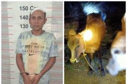 Warga Besitang Langkat tangkap pencuri dua ekor lembu