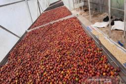 Akibat COVID-19, permintaan kopi Mandailing menurun