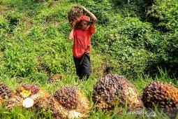 Gapki: Konsumsi minyak sawit dalam negeri tumbuh 7,2 persen