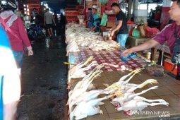 Harga daging ayam kampung di pasar Ambon naik