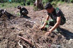 Kodim Aceh Jaya sediakan lahan pepaya madu dan jeruk siam kepada masyarakat
