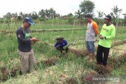 Penyuluh pertanian jadi pejuang ketahanan pangan di saat COVID-19 mewabah