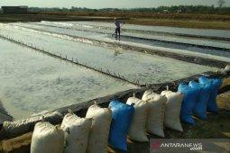Klungkung bantu perbaiki lahan petani garam Kusamba