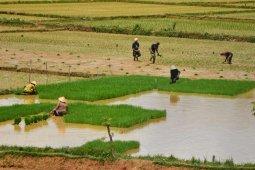 Pakar sebut ketersediaan air kunci ketahanan pangan