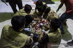 Harimau sumatera di Riau mati dijerat pemburu