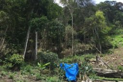 Polres Aceh Tengah tangkap pelaku penebangan hutan Gunung Gerunte